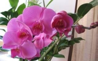 Как правильно обрезать отцветшую орхидею