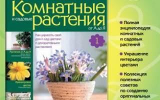 Домашние цветы журнал