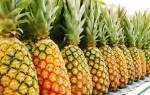 Как выращивают ананасы