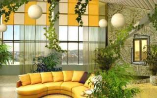 Домашние вьющиеся растения