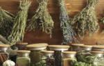 Растения полезные для человека