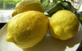 Лимон пандероза описание