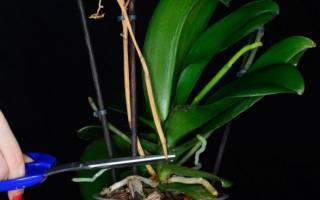 Орхидеи отцвели что делать дальше