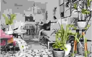 Комнатные цветы в интерьере