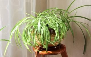 Комнатные растения низкорослые
