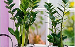 Комнатные растения для северной стороны