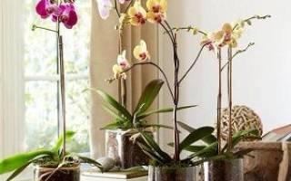 Орхидея дома приметы