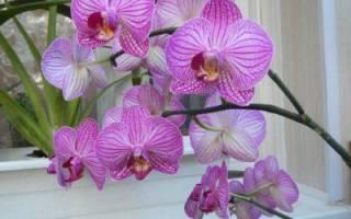 Подарили орхидею что с ней делать