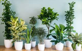 Цветы с хорошей энергетикой для дома